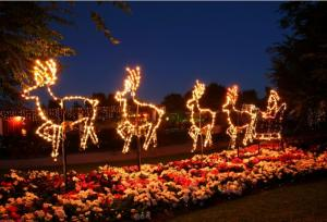 Hunter_Valley_Christmas_Lights_Tour